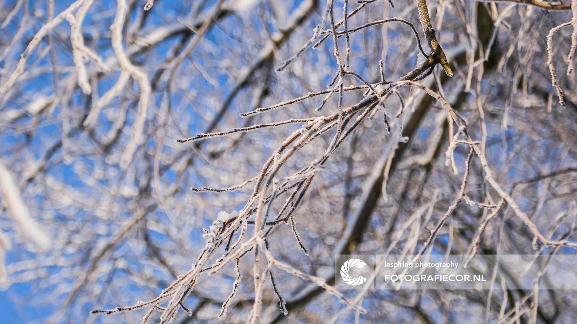Winterse achtergrond boomtakken | tegen blauwe lucht | Landschapsfotograaf