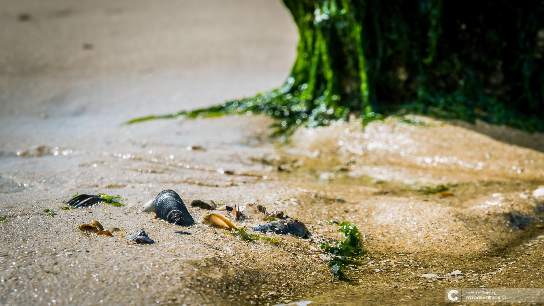 Macro schelpen Noordzeestrand, Nederland