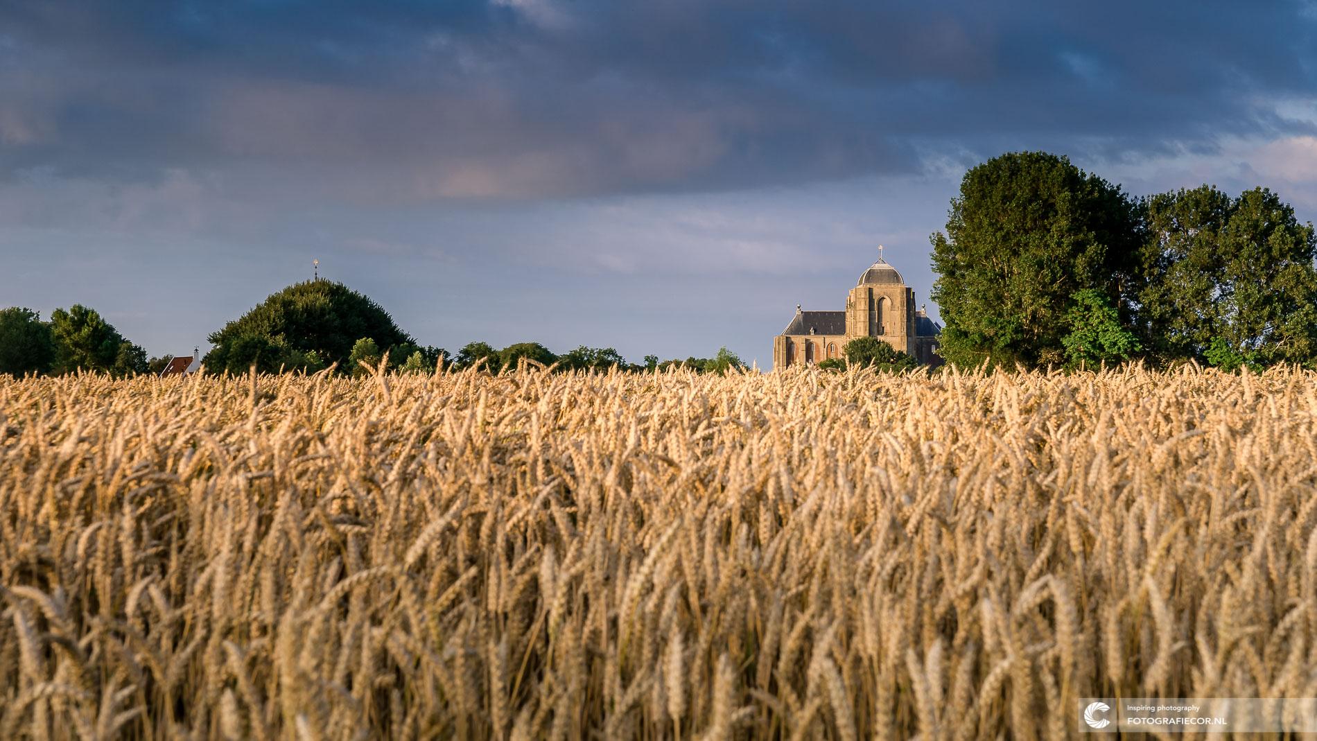 Zomeravond kerk Veere| korenvelden