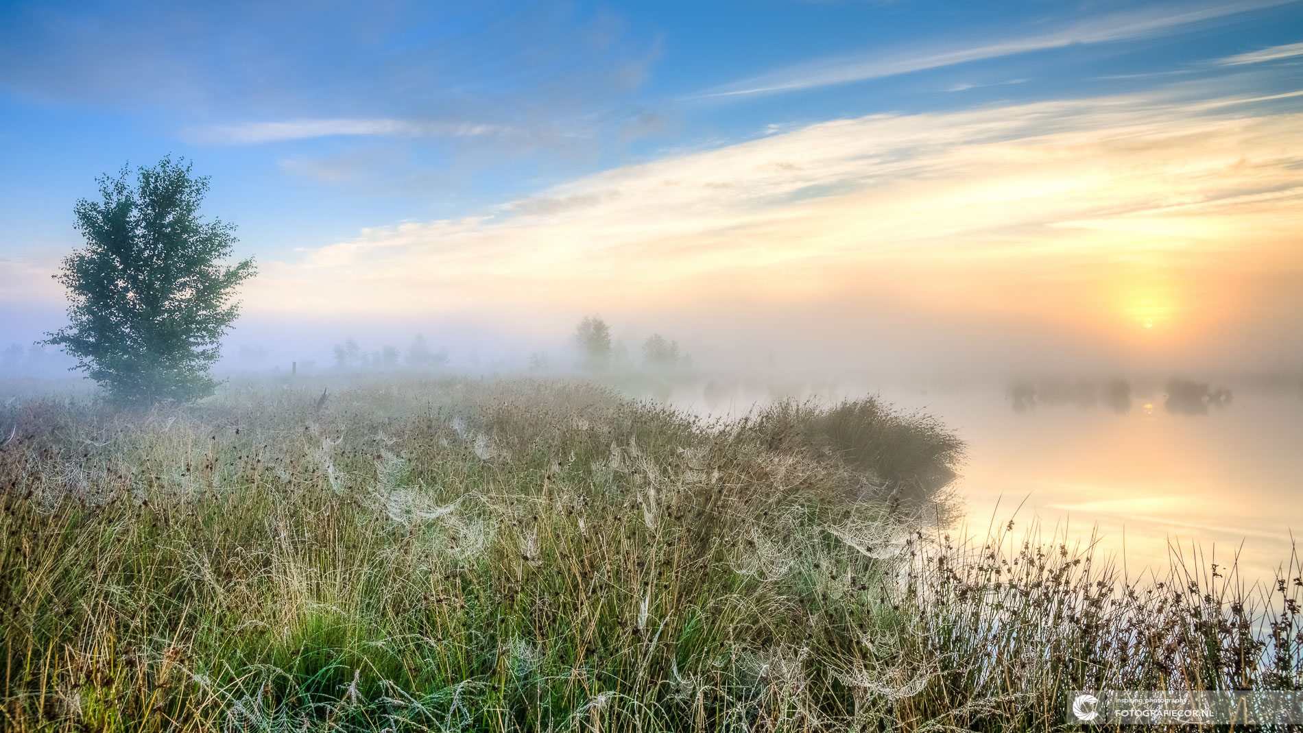 Dwingelderveld | zonsopkomst mistig vennen | Natuurfotograaf | Nederland