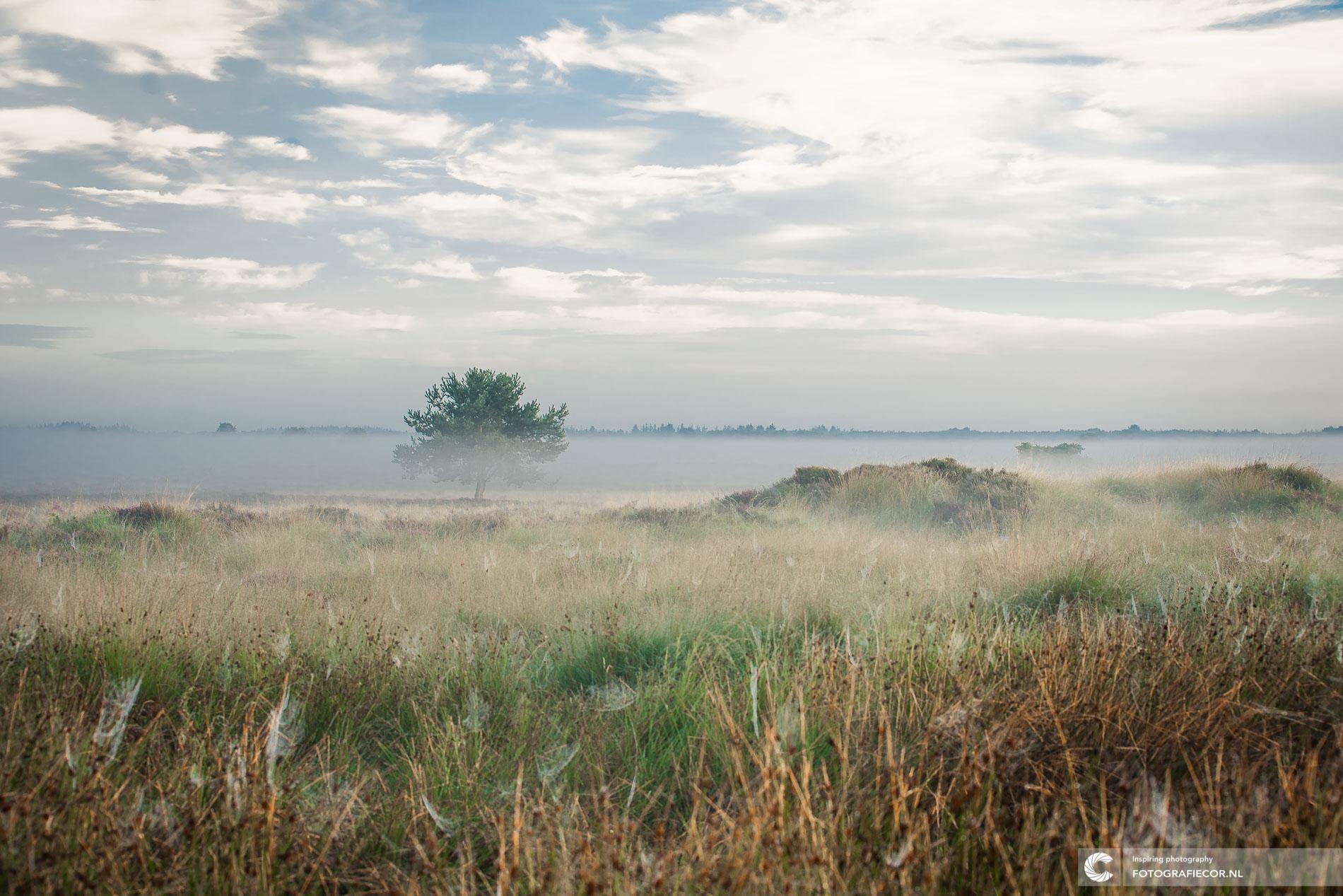 Dwingelderveld | Zonsopkomst mist heidelandschap Holland