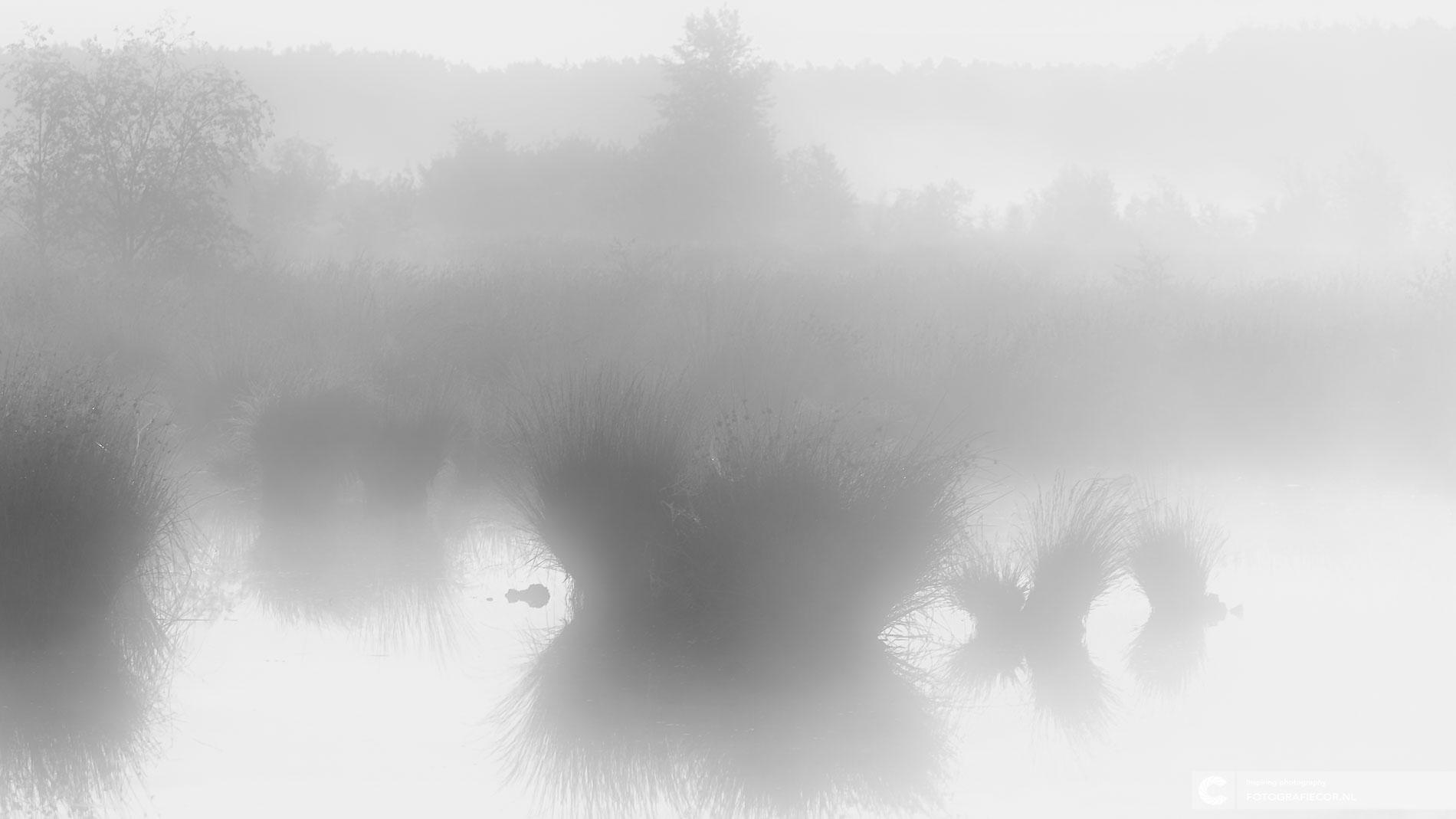 Dwingelderveld | Mistig vennen | Zwart wit | Natuurfotograaf | Nederland