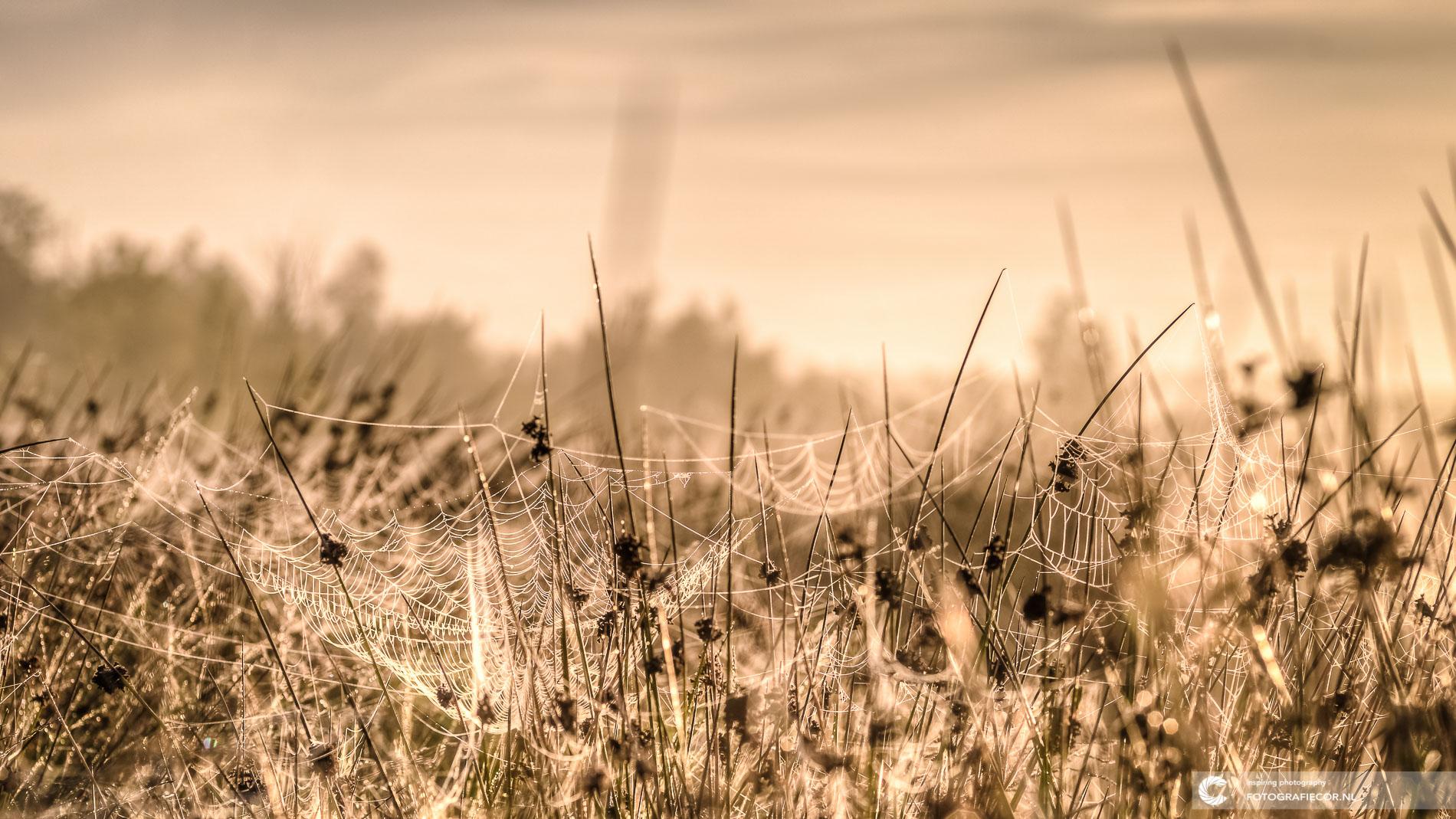 Dwingelderveld | macro fotografie spinnenweb ochtendzon | Natuurfotograaf | Nederland