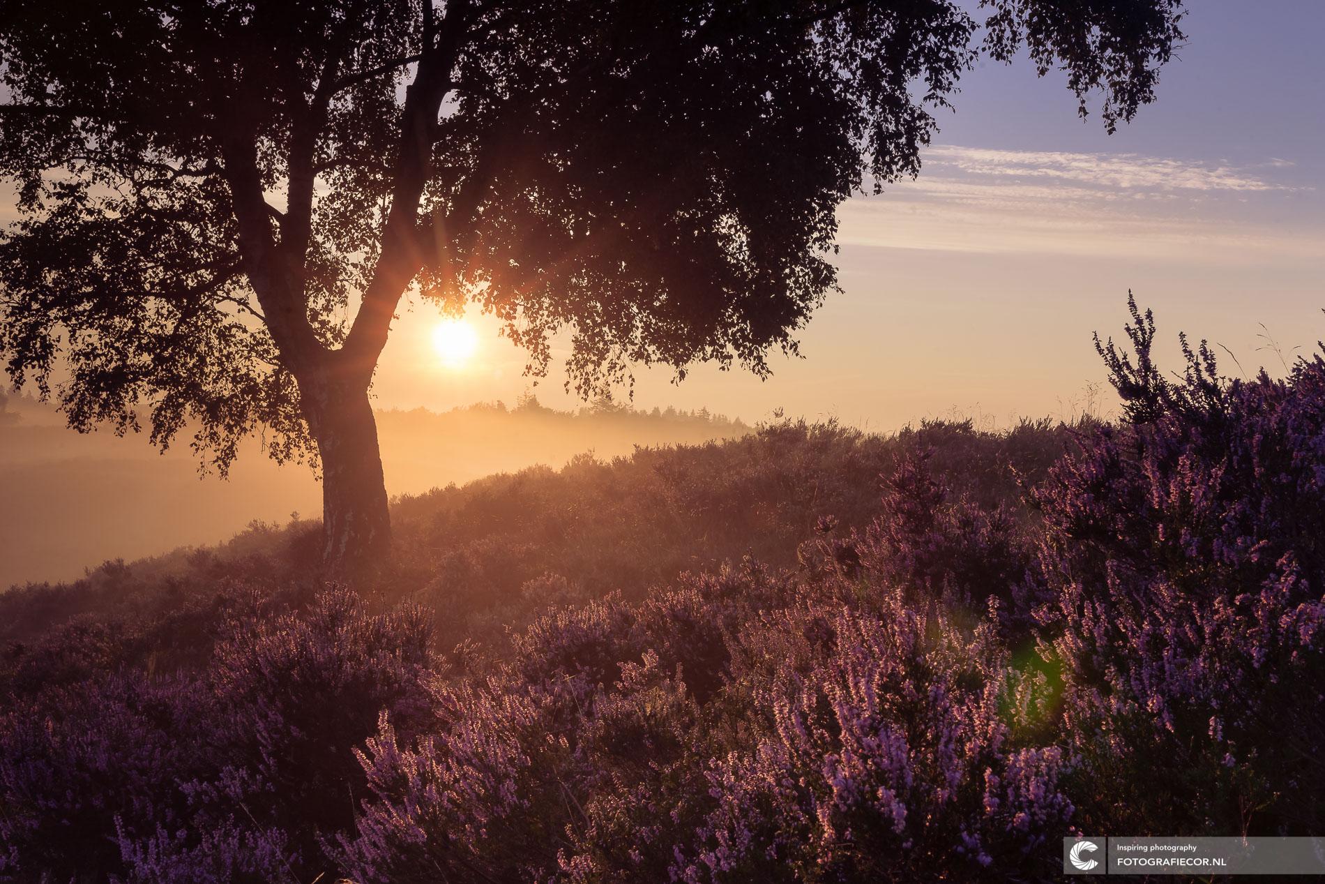 Romantische zonsopgang in paars heidelandschap | Landschapsfotograaf