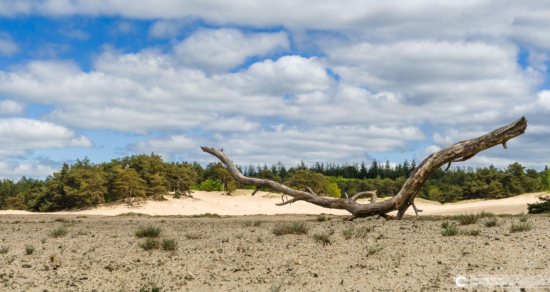 zandverstuiving Veluwe, Hulsthorsterzand Gelderland | Landschapsfotograaf
