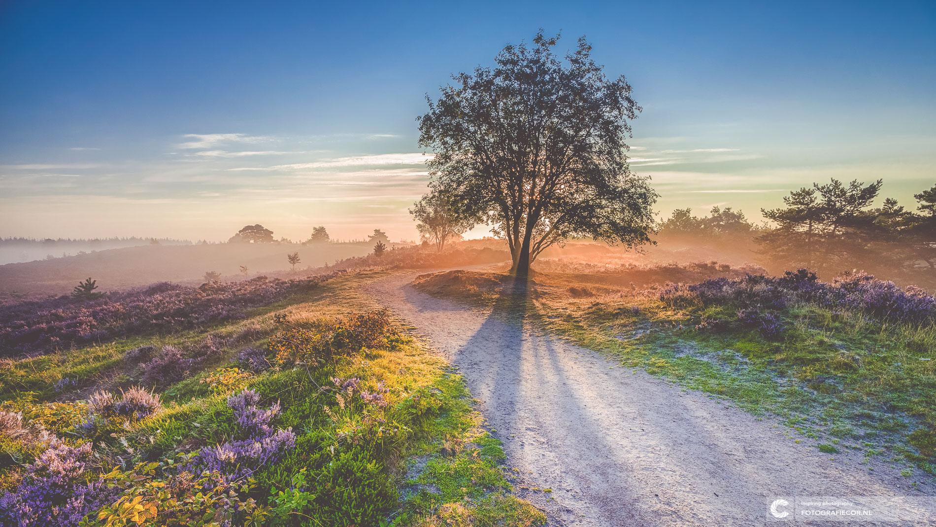 Zonnestralen zonsopkomst heidelandschap, Heerde | Landschapsfotograaf