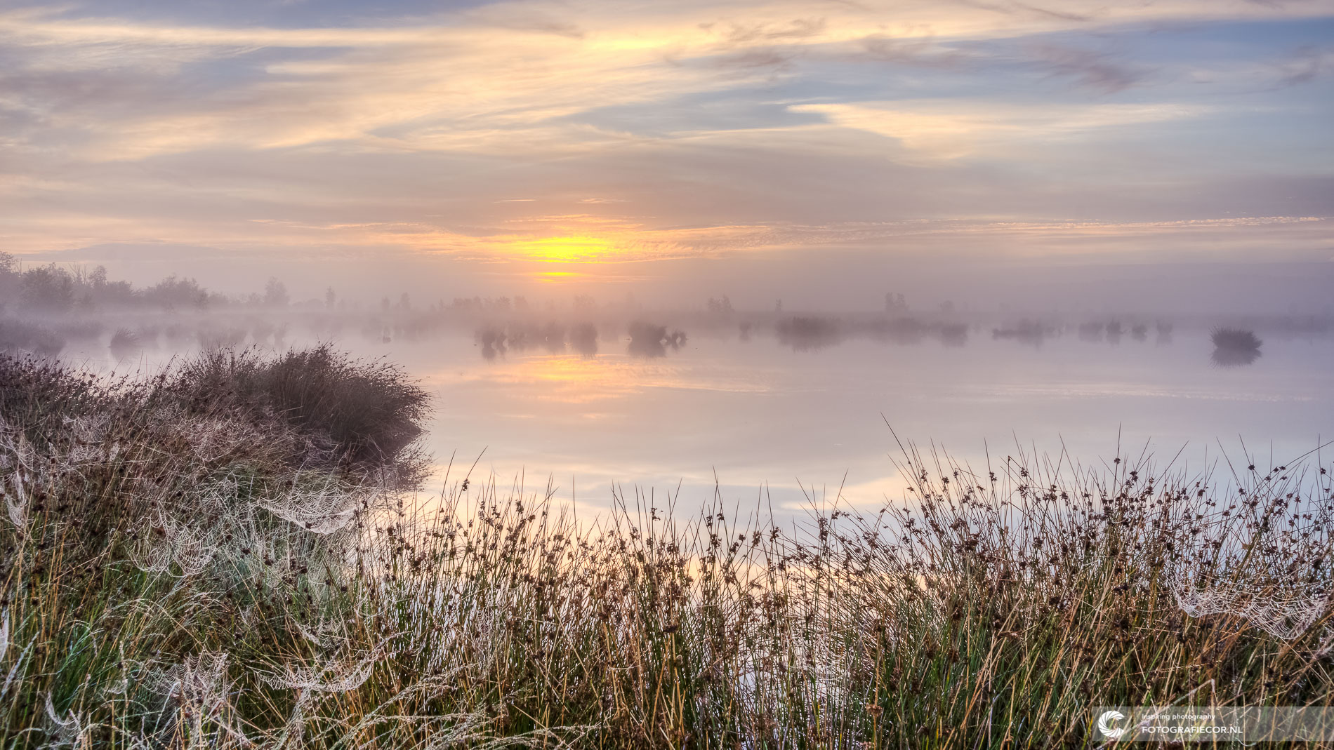 Pastelachtige zonsopkomst Nationaal landschap Dwingelderveld | Landschapsfotograaf