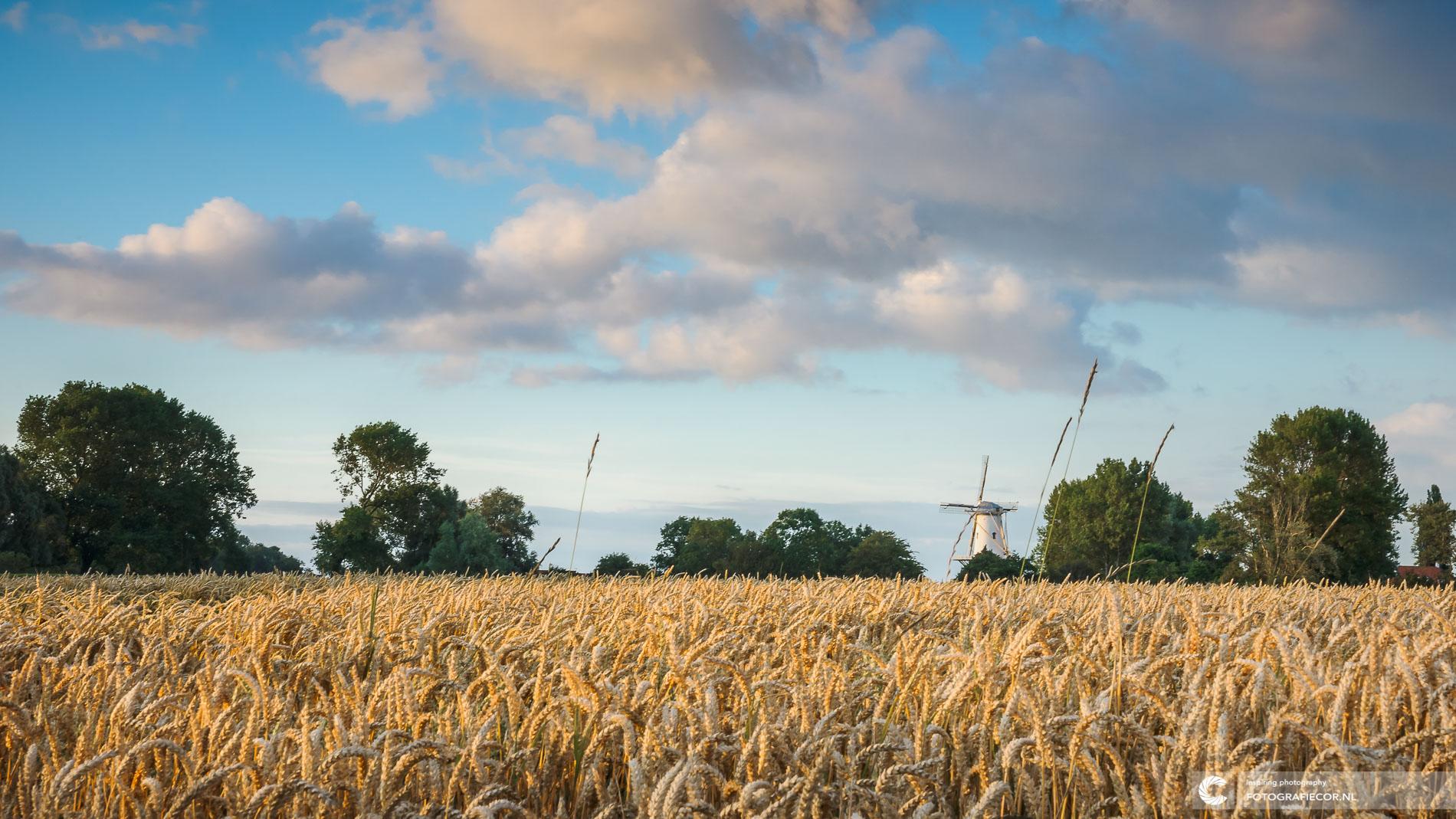 Witte molen Veere, Zeeland | Landschapsfotograaf