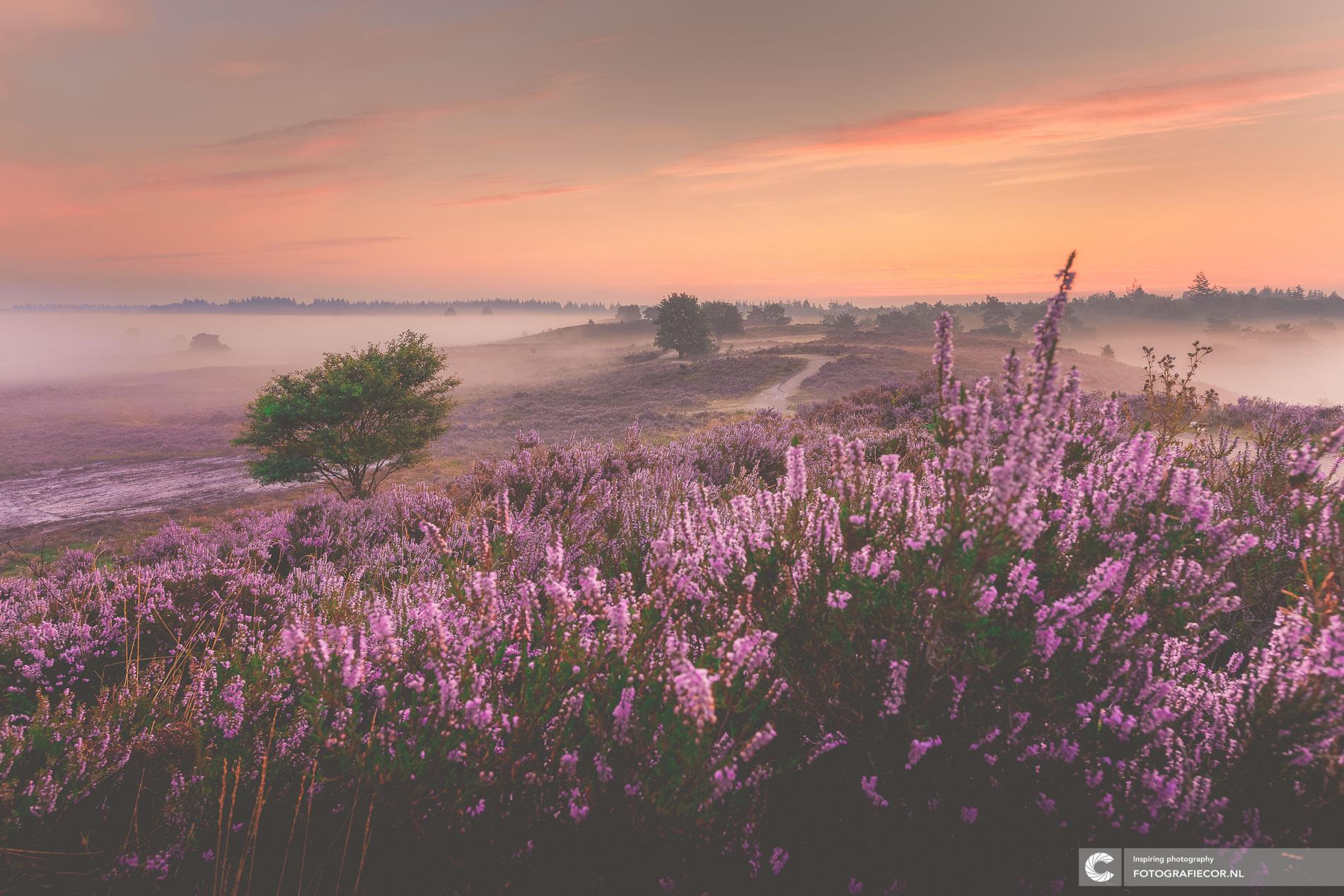 zonsopkomst heidelandschap Schaapskooi de Dellen, Heerde | Landschapsfotograaf