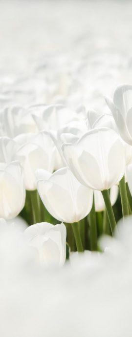 portfolio | Natuur | Witte Tulp steekt boven het maaiveld uit