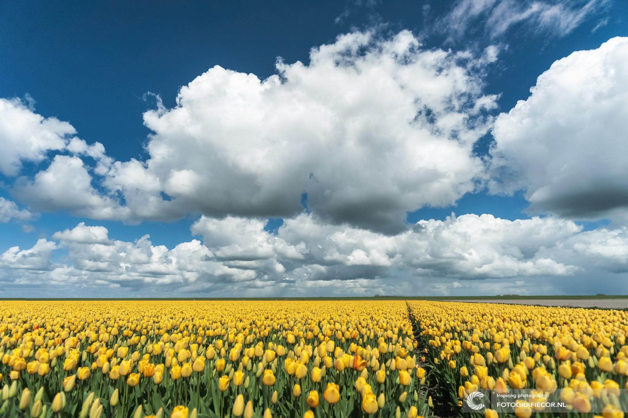 Gepubliceerde tulpen foto landschap van Fotograaf uit Kampen in de National Geographic | Foto gemaakt tijdens tulpenfestival van Step in de Noordoostpolder