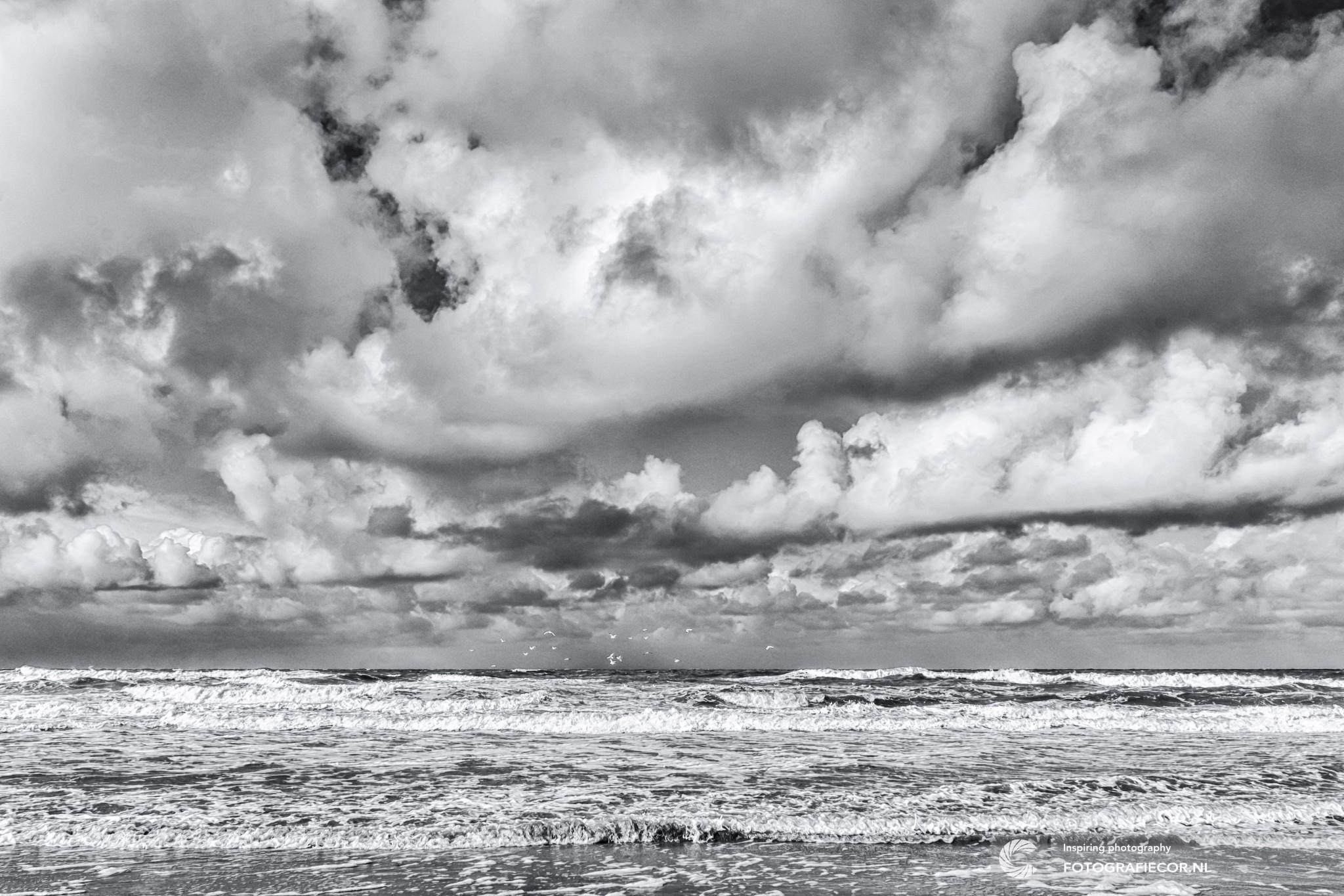 Storm in harlingen friesland post