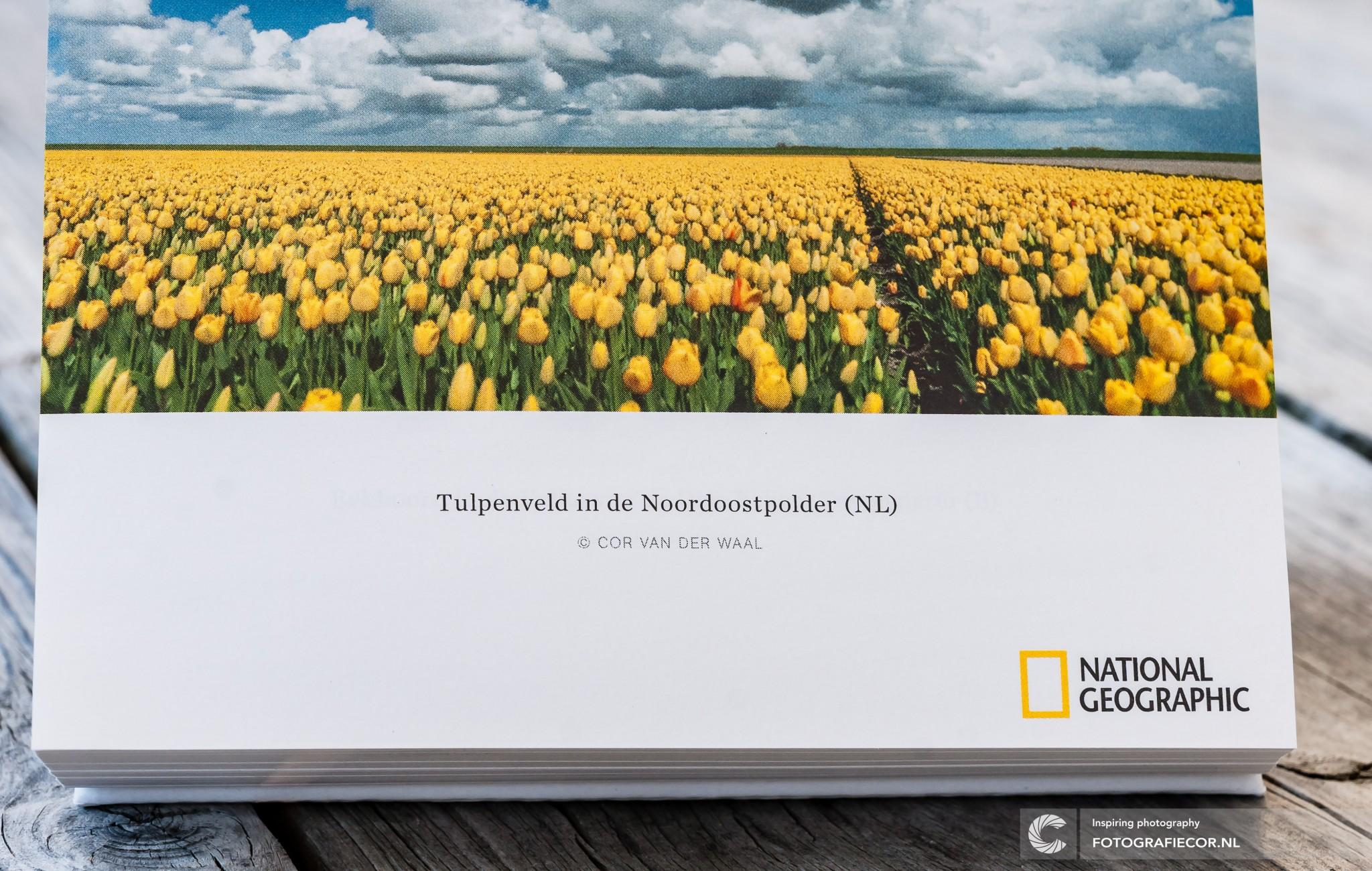 Fotograaf uit de gemeente Kampen in National Geographic met Tulpenfoto uit de Noordoostpolder