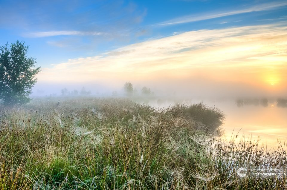 SNP Natuurreizen | Schaap in desolaat heideveld | Nederland | moeras | natuurmonumenten | landschapsfotograaf