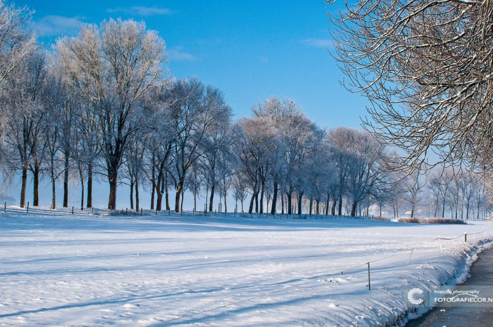 Foto Kampen | Zwartendijk | Winterse achtergrond boomtakken | tegen blauwe lucht | Landschapsfotograaf | foto bewerken hdr