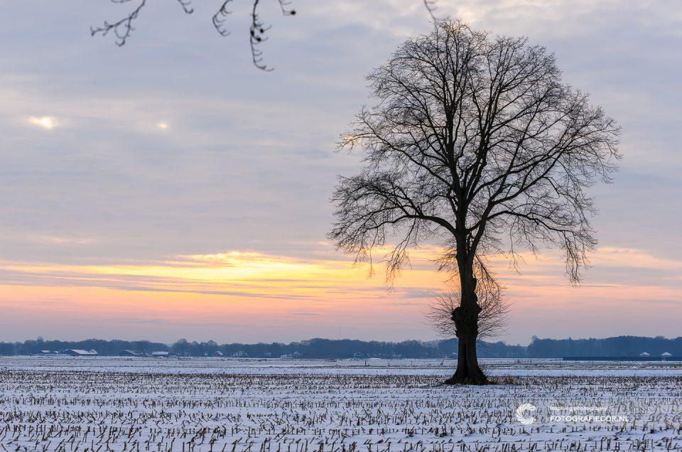 Foto Kampen | zoom.nl | Ochtend boven Nederlands polder | winterlandschap eenzame boom | landschapsfotograaf