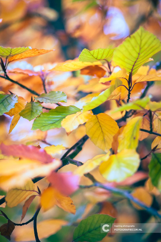 herfstfoto's maken | Bladeren | Bomen| Takken | herfstkleuren | seizoen | natuur | Macro