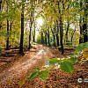 Portfolio | Landschap | herfstfoto's maken | Bladeren | Bomen| Takken | herfstkleuren | seizoen | natuur | Macro