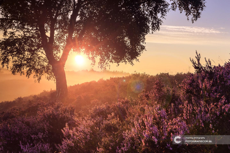 herfstfoto's maken | Heide | Zonsondergang | Lensflare | Bomen | Takken | herfstkleuren | seizoen | natuur | Macro