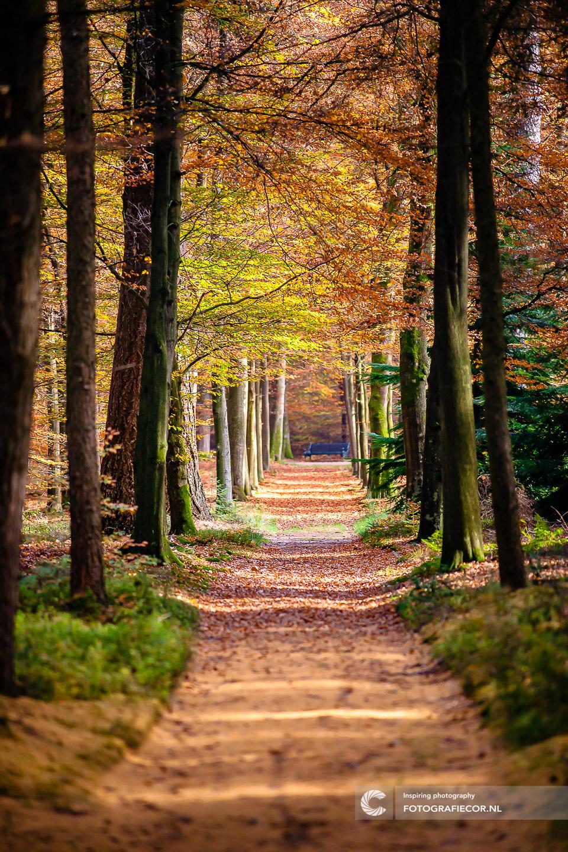 herfstfoto's maken | Boslaan | Bladeren | Bomen | Takken | herfstkleuren | seizoen | natuur | Macro