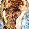 herfstfoto's maken | Vogels | Specht | Bomen | herfstkleuren | seizoen | natuur | Macro