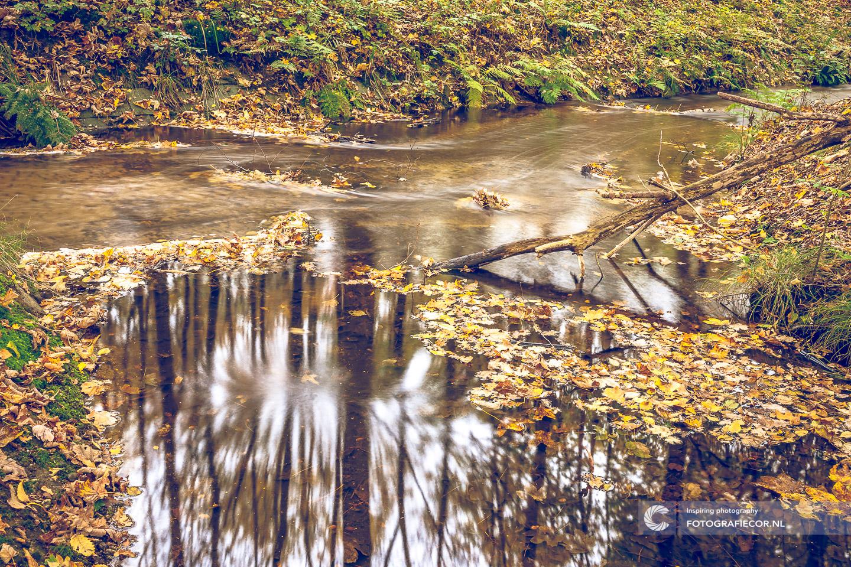 Waterloopbos | herfstfoto's maken | Sluitertijd | Beek | Water | Bomen | Takken | herfstkleuren | seizoen | natuur | Macro