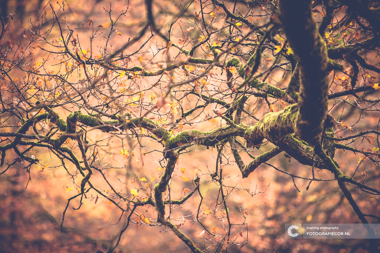 herfstfoto's maken | Mos | Flare | Sfeer | | Bomen | Takken | herfstkleuren | seizoen | natuur | Macro