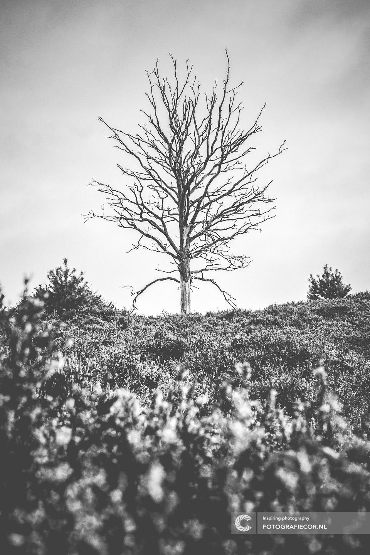Postbank | herfstfoto's maken | Heide | Lensflare | Bomen | Takken | herfstkleuren | seizoen | natuur | Macro
