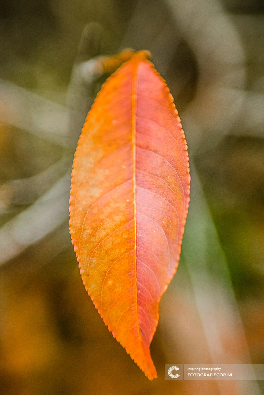 herfstfoto's maken | Bomen | Takken | herfstkleuren | seizoen | natuur | Macro
