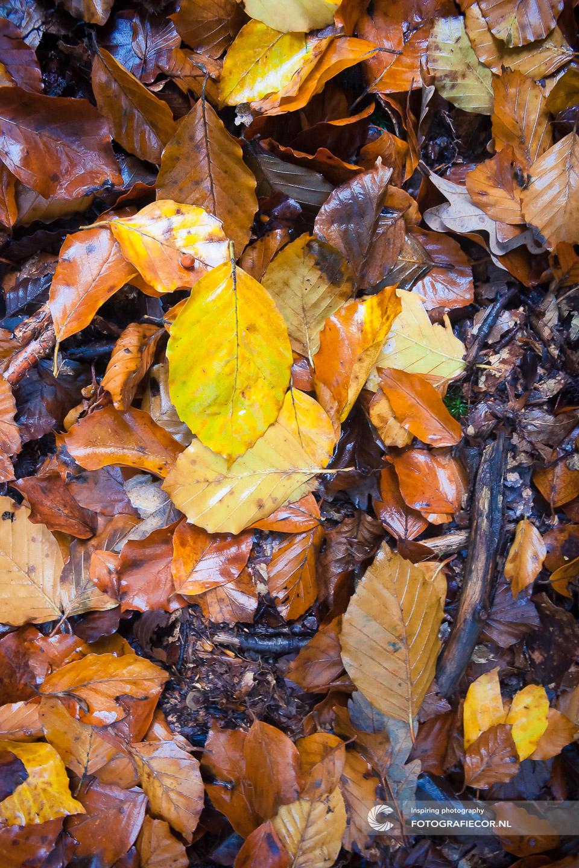 herfstfoto's maken | Grond | Regen | water | Bomen | Takken | herfstkleuren | seizoen | natuur | Macro