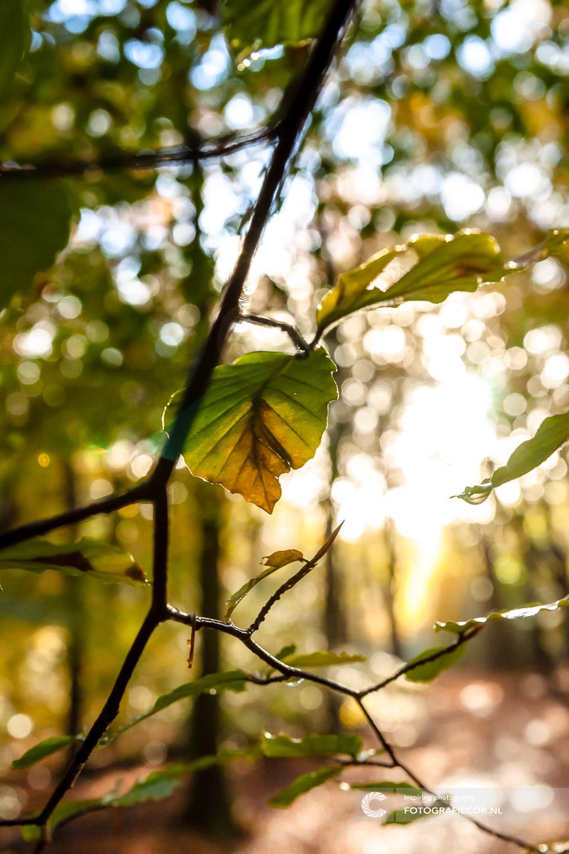 herfstfoto's maken | Transparant | Tegenlicht | Zon | Lensflare | Bomen | Takken | herfstkleuren | seizoen | natuur | Macro
