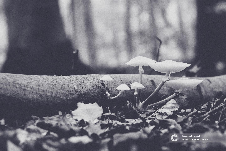 Oudemansiella mucida | Porseleinzwam | Herfst | Paddenstoel | Beuken | wit | bos | natuur | Macro | Zwart-wit
