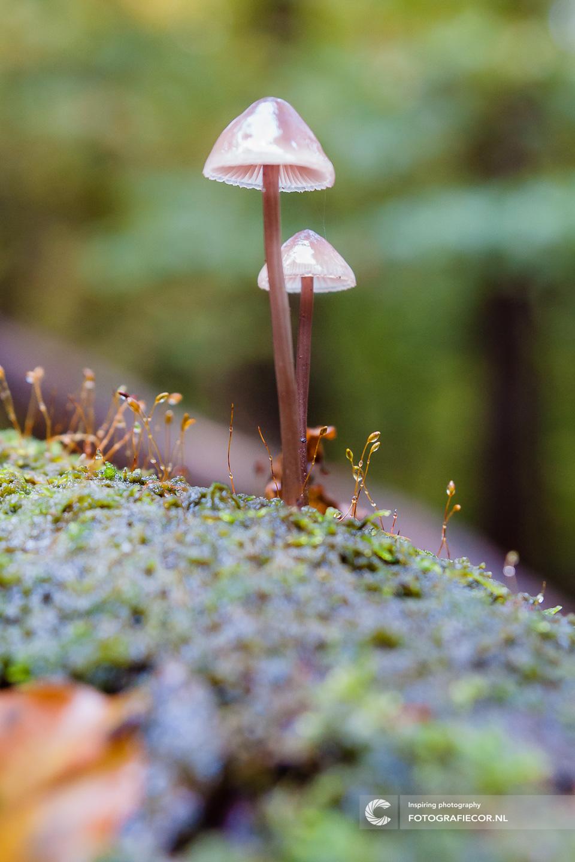 Herfst | seizoen | Paddenstoel | macro | boom | Natuur | Bos | Natuur | Zwam