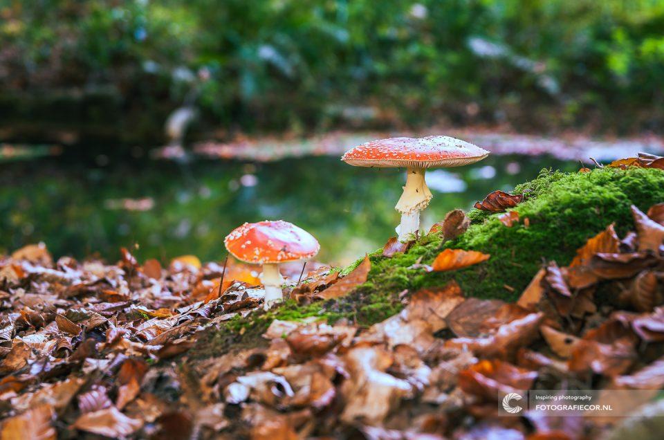 paddestoelen fotograferen | Fotograaf | foto | Kampen | herfst | fotografie