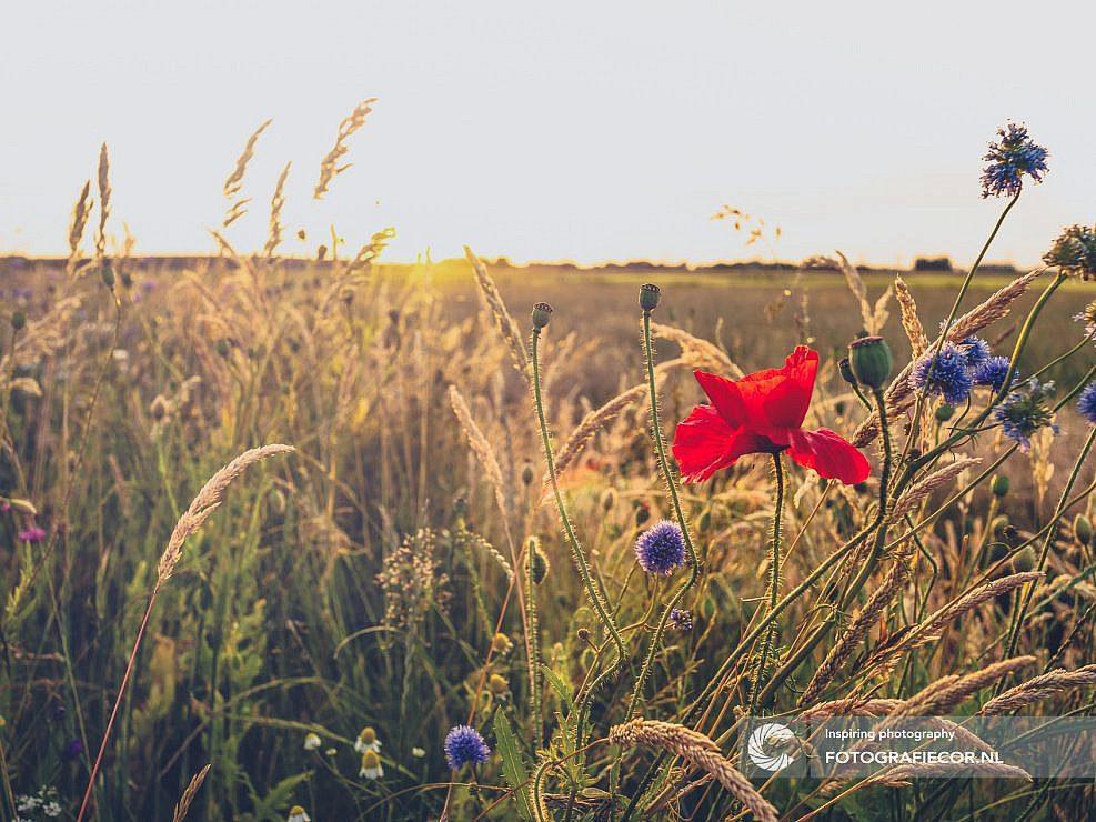 Portfolio   Natuur   Veldbloemen   voorjaar   natuur   lente   gras   warm   distels