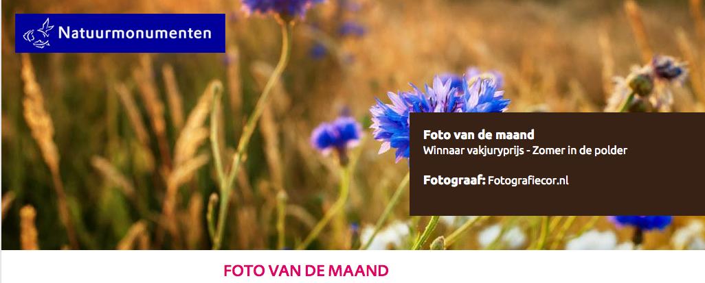 foto van de maand | natuurmonumenten | juli | fotograaf | kampen | korenbloem