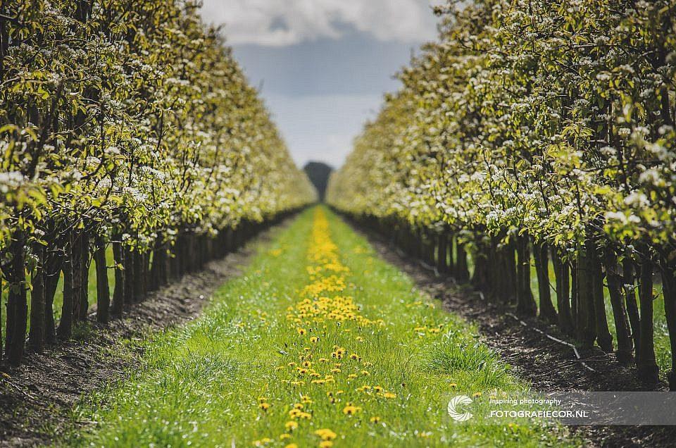 Diafragma uitgelegd | Portfolio | Boomgaard | voorjaar| | bloesem