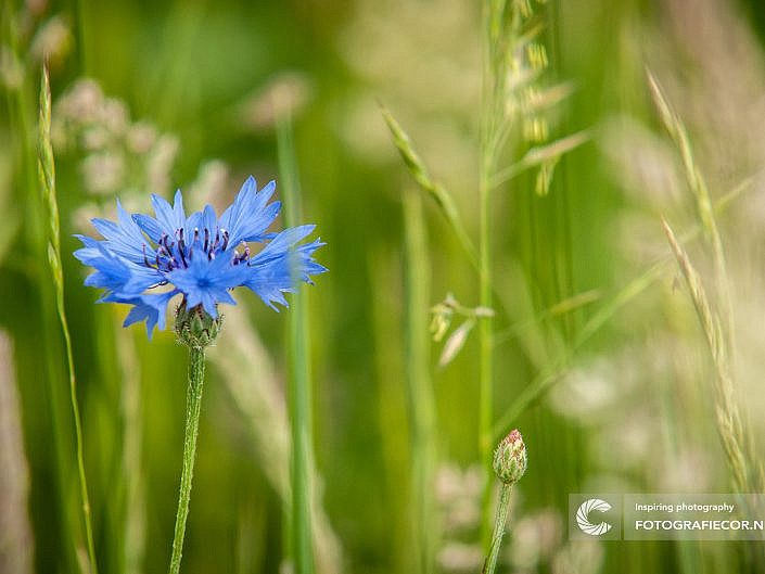 Natuur & Flora