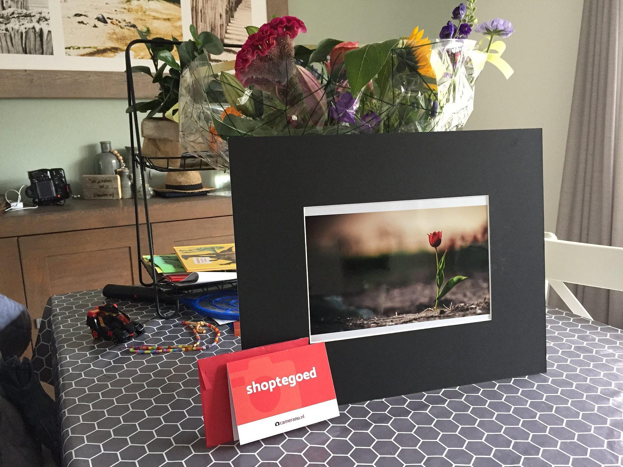 Tulpenfoto | winnaar | fotograaf | step