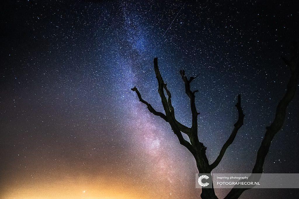 De Core boven een dode boom