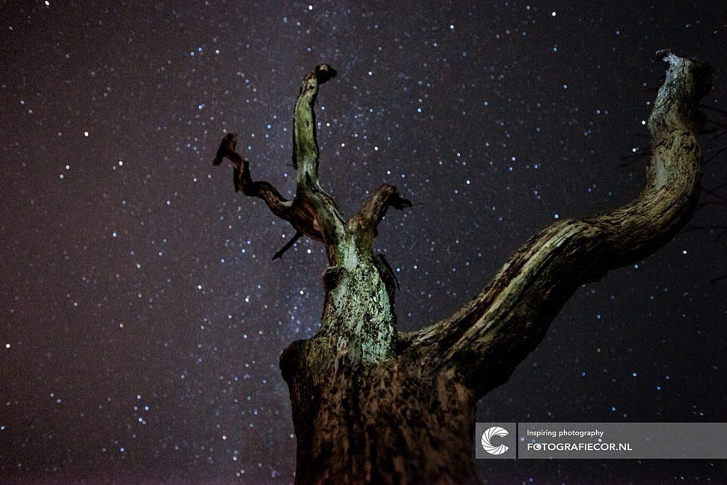 Sterren, Melkweg, nachtfotografie, cursus, fotoblog, fotograferen, nachtfoto