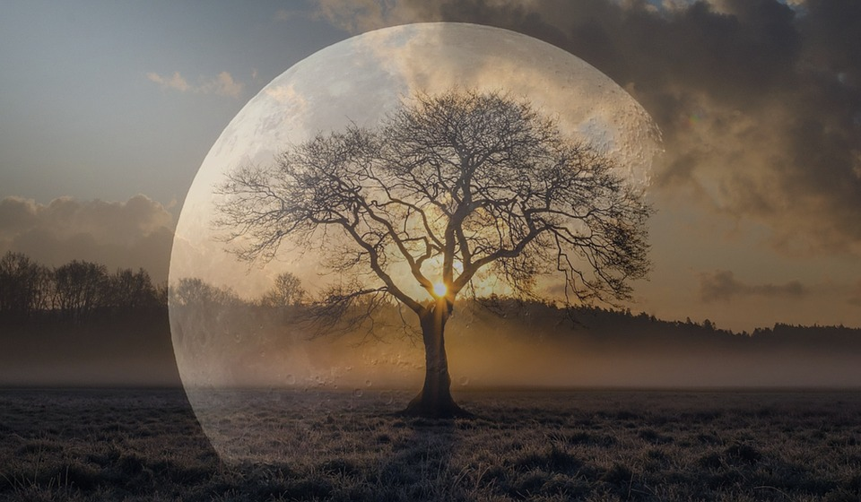 Samengestelde foto van maan en boom