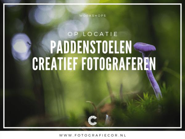paddenstoel workshop fotograferen, Paddenstoelen fotografie