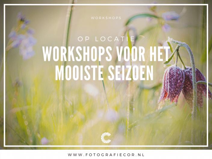 Workshop Seizoenen