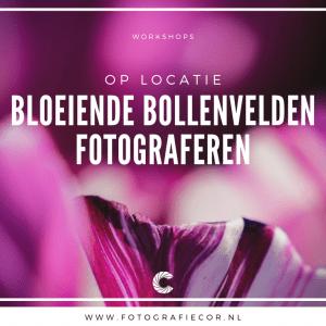 Workshop tulpen fotografie, Tulpen velden fotograferen in de Noordoostpolder