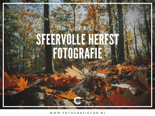 Workshop sfeervolle herfst fotografie in het bos
