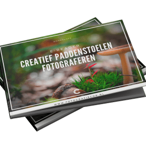 Workshop paddenstoelen fotograferen