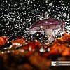 Creatief Herfst paddenstoel fotografie workshop